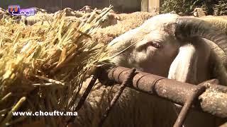 فيديو هام للمغاربة..هاكيفاش تْقلبو الحولي ديال العيد الكبير |