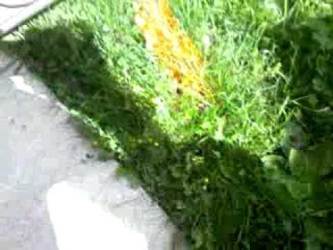 Rote ameisen im garten bekämpfen