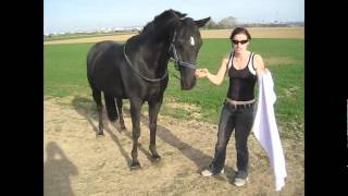 How To Teach Your Horse FIVE TRICKScount, Smile, Grab