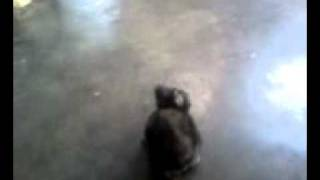 Phim Hoat Hinh | cute baby rabbit bob | cute baby rabbit bob
