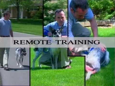 Part 1: Innotek Remote Collar Training for Dogs - www.Innotek.net