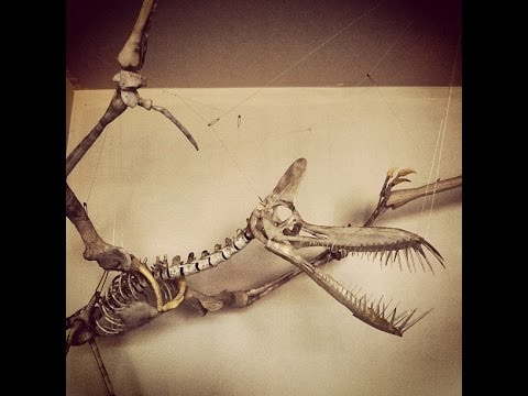Science Minute 11 Earliest Pterosaur Fossils Found in China