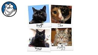 кот и видео, видео про котов, смешные коты видео, прикольные коты видео