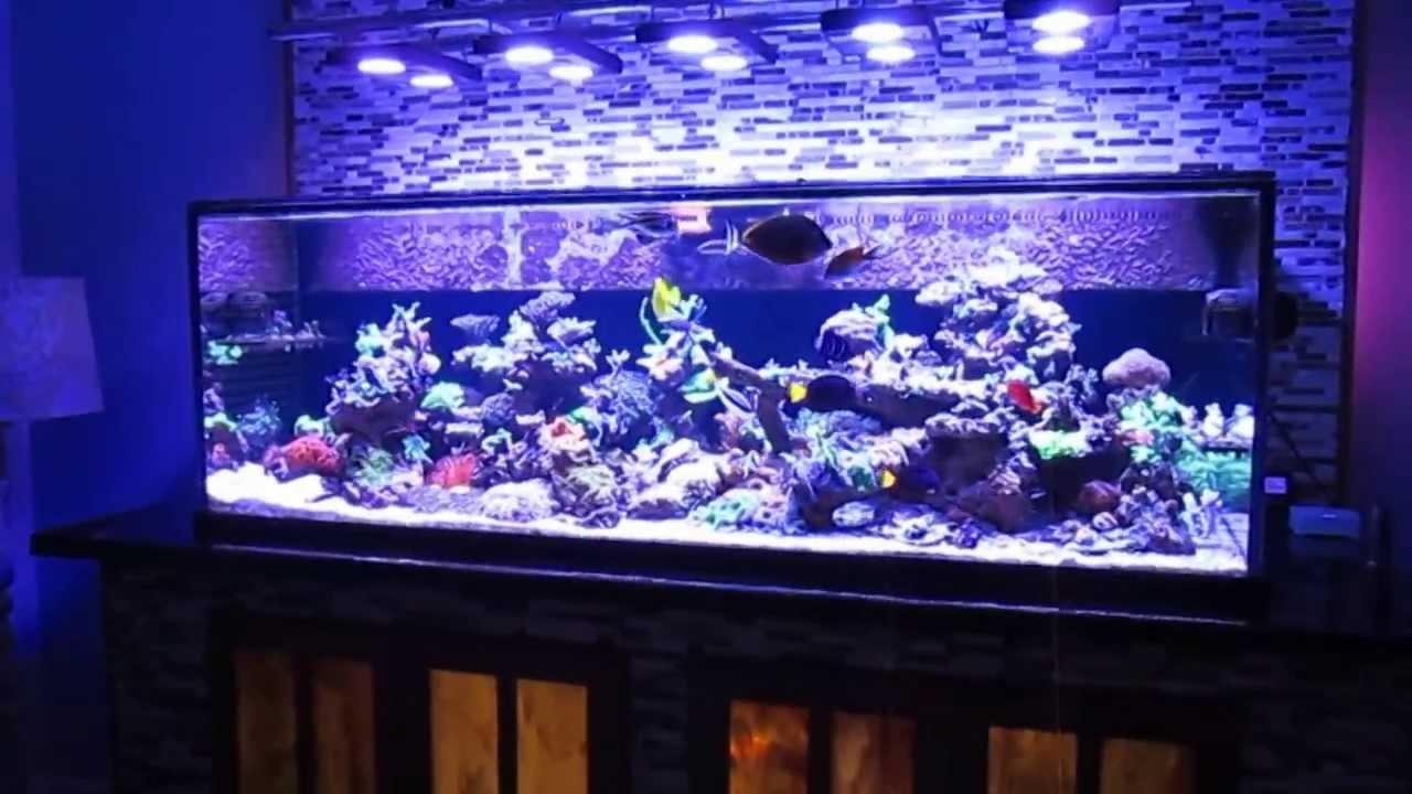 Saltwater fish tank reef aquarium myreefliving ben 200 for 200 gallon fish tank dimensions