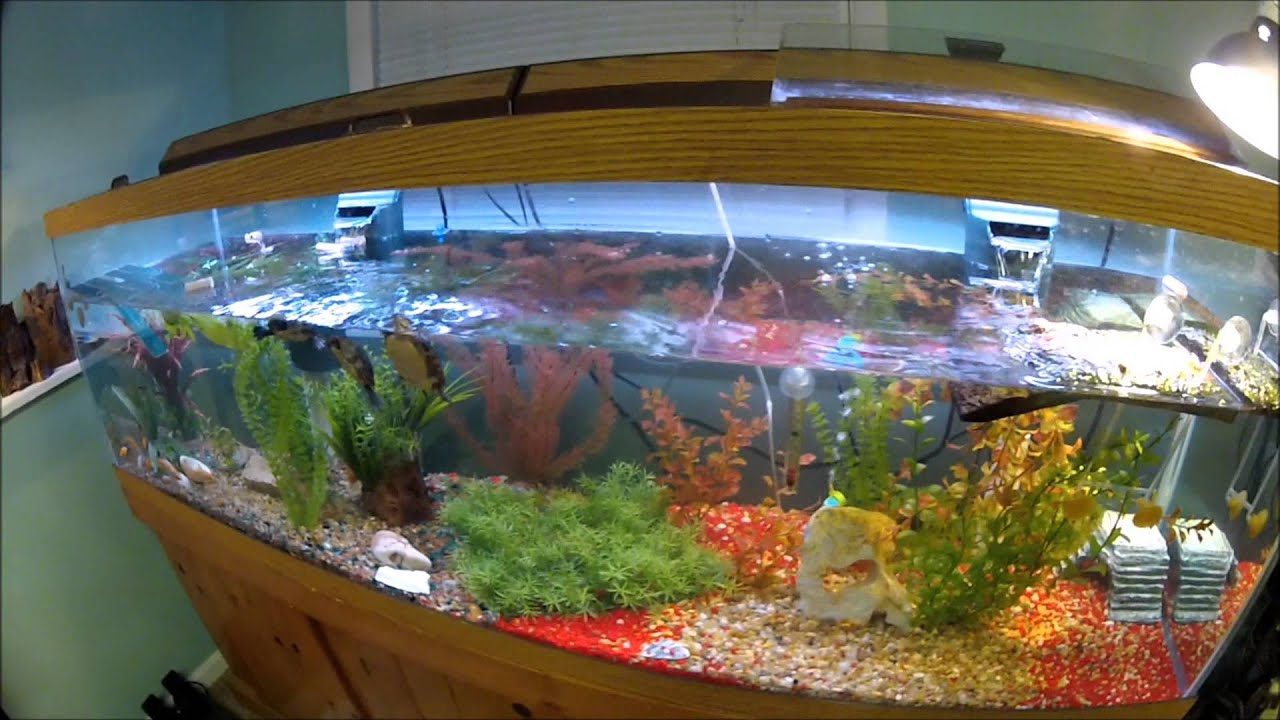 125 gallon painted turtle tank set up - YouTube