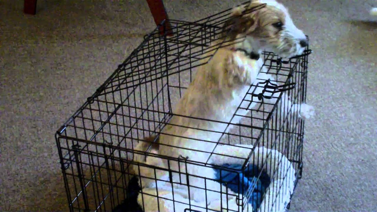 Dog Escapes Cage Youtube
