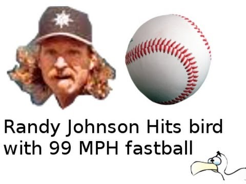 Bird gets hit by Baseball (Randy Johnson)