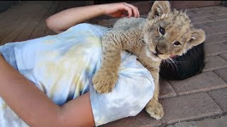 [Baby Lion Attacks Pretty Girl] Video