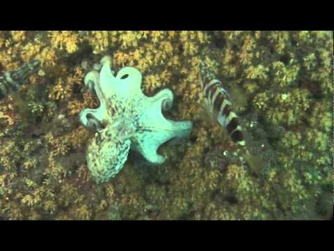 Diving in the Mediterranean Sea: Granada, Spain