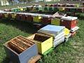 Bees Pčele