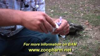 The BAM Deer Immobilization Process