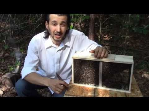 Starting beekeeping with package bees.  Best way to hive package bees.