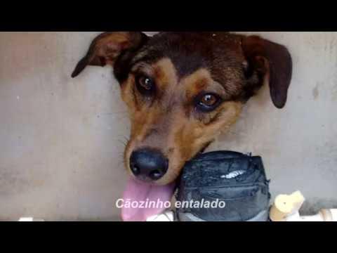 Cãozinho fica com cabeça entalada em muro