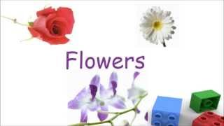 Flowers for kids, flower flashcards