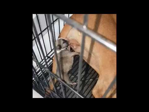 The best funny puppies dogs 2020