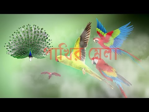 Funny Parrot and picok Flying