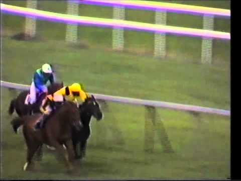 1983 joe mcgrath memorial stakes stanerra