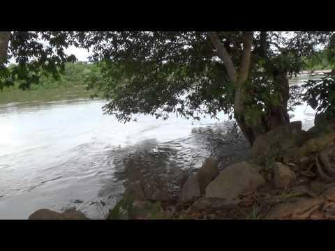 Canto de pássaros, Natureza,  Rio taquari,   Relaxamento,