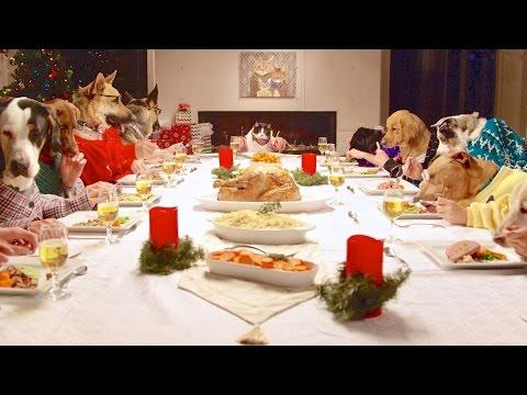 13 кучиња и 1 мачка уживаат во празничната вечера