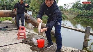 Câu cá trê sông không ngờ được toàn cá nheo  | catfish fishing