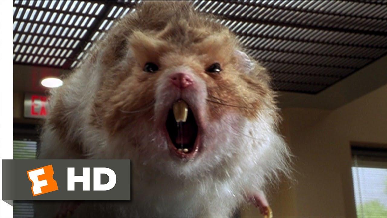 hamster film