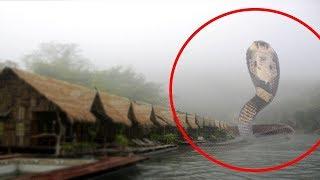 5 Loài �ộng Vật Khổng Lồ Bắt Gặp Trên Camera & Phát Hiện Trong Cuộc Sống Thực