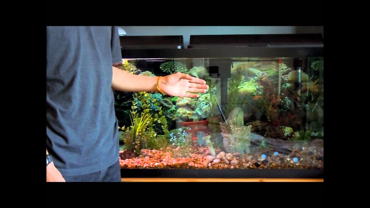 Setting up and maintaining a fish tank tutorial youtube for Fish tank set up