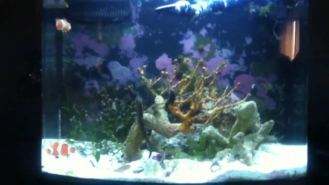 Small saltwater fish tank - YouTube