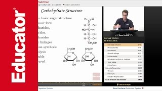 """""""Metabolism & Nutrition"""" 