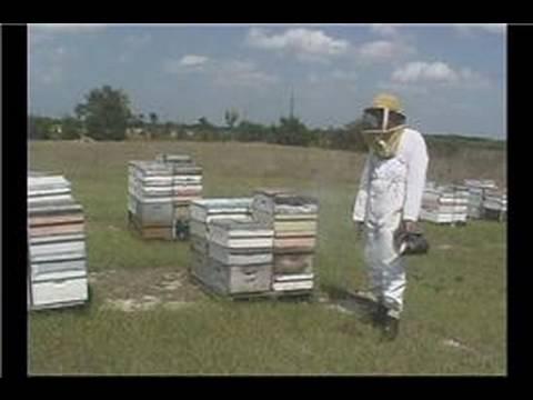 Beekeeping Basics : Beekeeping: Inspecting a Beehive