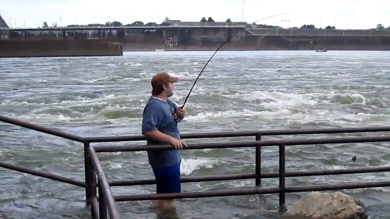 Striper fishing below pickwick dam youtube for Buy tennessee fishing license