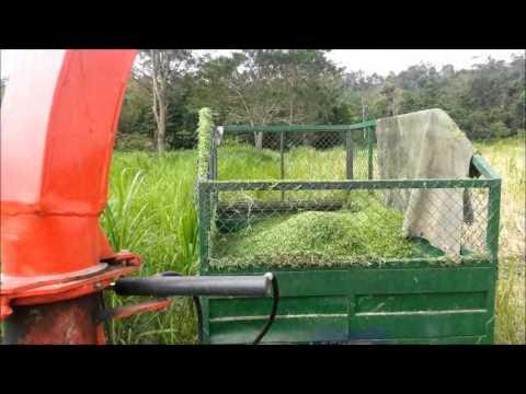 Semiestabulación ganado bovino