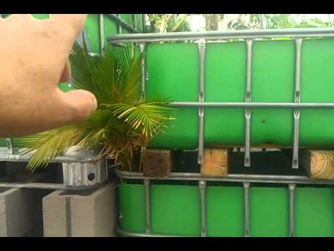 Aquaponics how to build