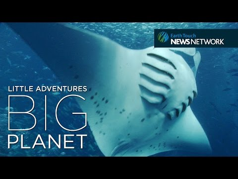 Saving the Ocean's Gentle Giants