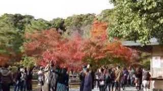 Nihon No Utsukushi(Keindahan Jepang)