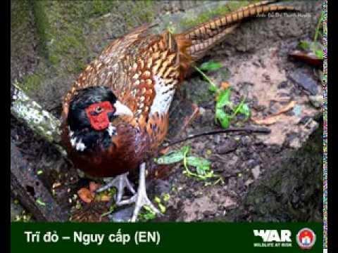 Một số loài Chim Việt Nam