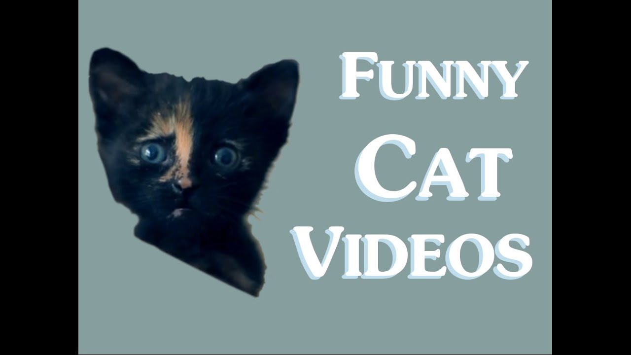 Funny Cat Videos (Clean) New 2014 - Funny clean cat video ... Funny Videos Clean