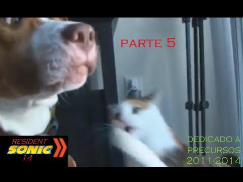 gatos y perros graciosos (loquendo) parte 5