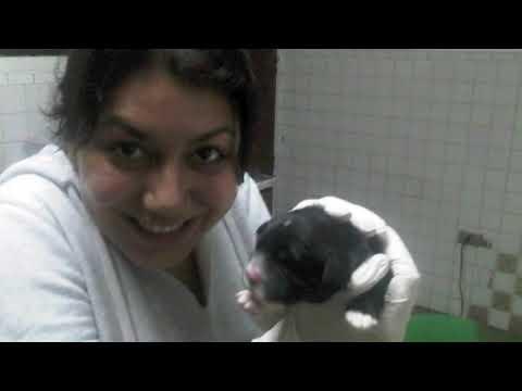 Una Historia de éxito: Sobreviviendo al Parvovirus Canino (Surviving Parvovirus)