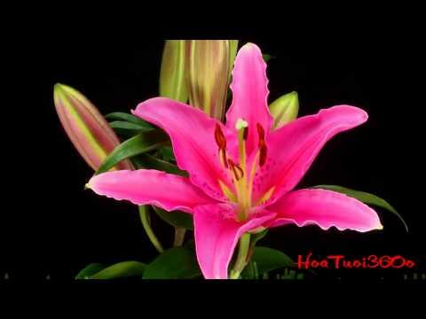 Những bông hoa đẹp nhất lớn lên như thế nào - HoaTuoi360o