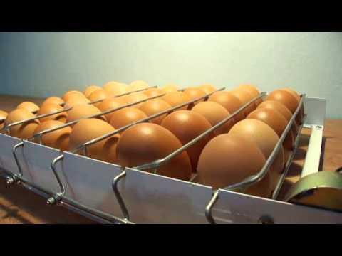 egg turner
