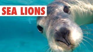 Focas y leones de mar divertidos