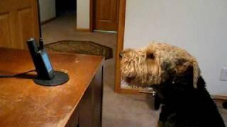 A dona fala pelo telefone e o cão responde...