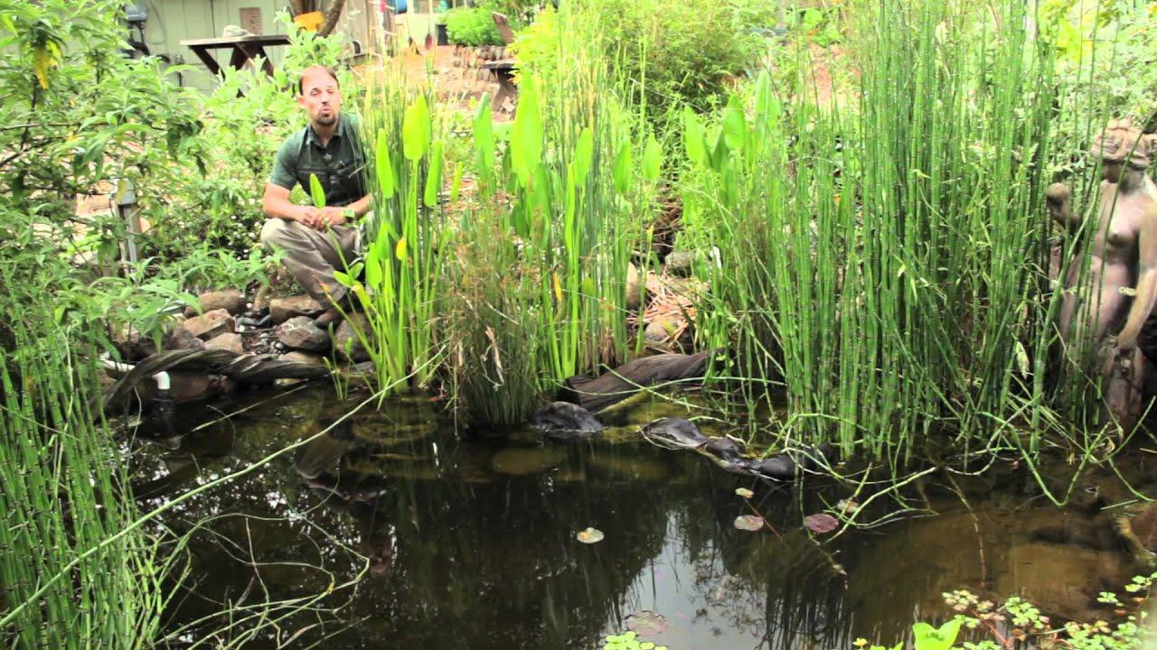 for Plastic pond plants