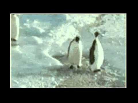 Relationship - Cute Penguins
