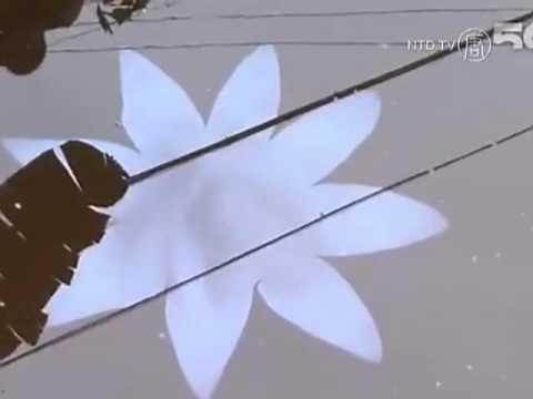 Hoa sen huyền bí xuất hiện trên sông ở Trung Quốc