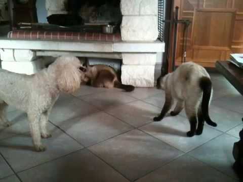 Chat chien drole trop marrant youtube - Photo chat marrant ...