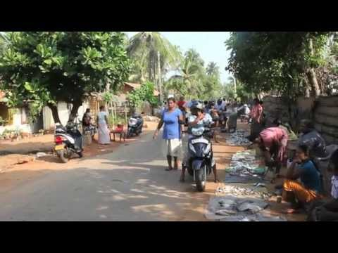Un p'tit vélo au Sri Lanka