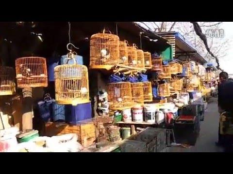 chợ chim cảnh ở Trung Quốc