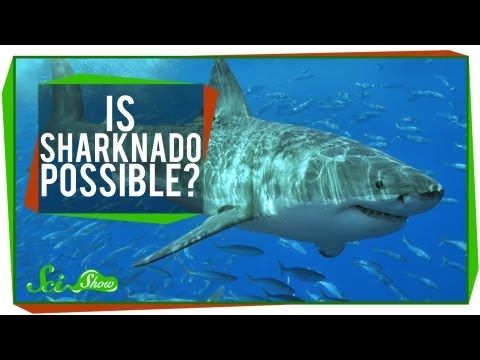 Burning Question: Is A Sharknado Possible?!